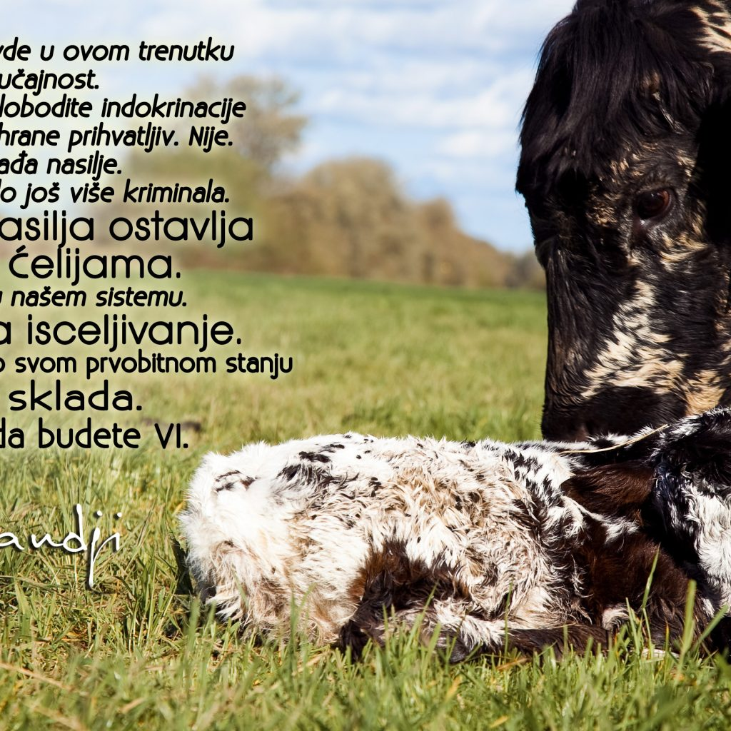 Mohanji Quote In Serbian – From MeVeg Conference 2015